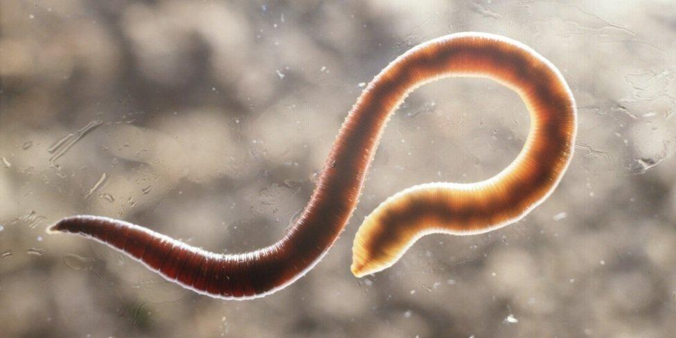 чистка от глистов и паразитов таблетки