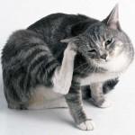 Что делать, если домашнее животное укусил клещ